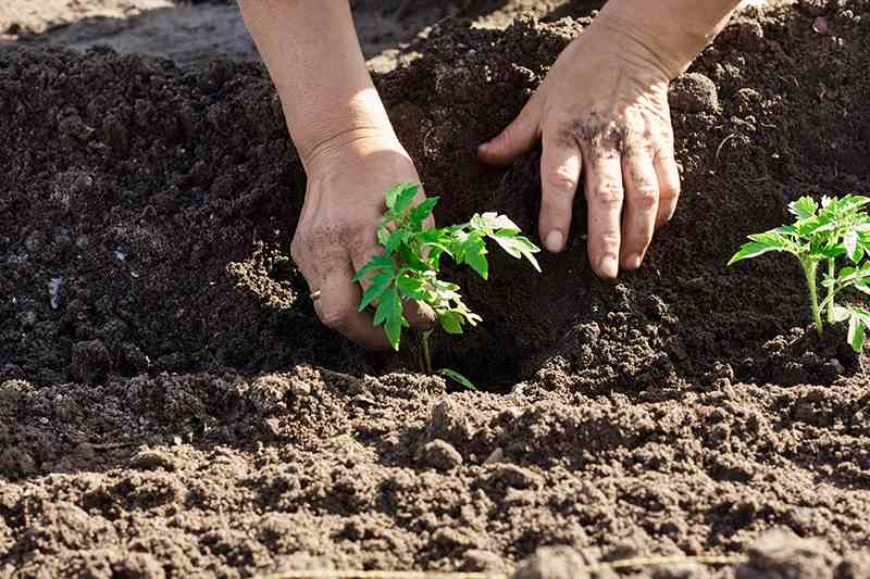 Contribute to Top soil-1