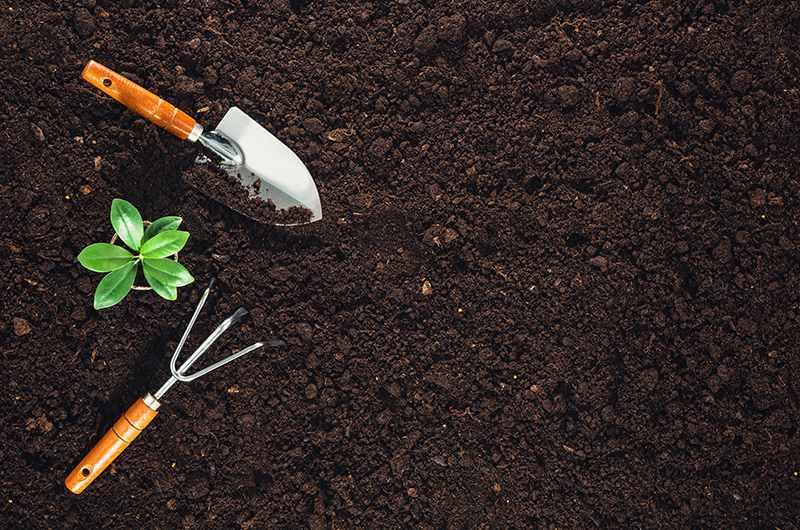 How will an organic garden help me-1